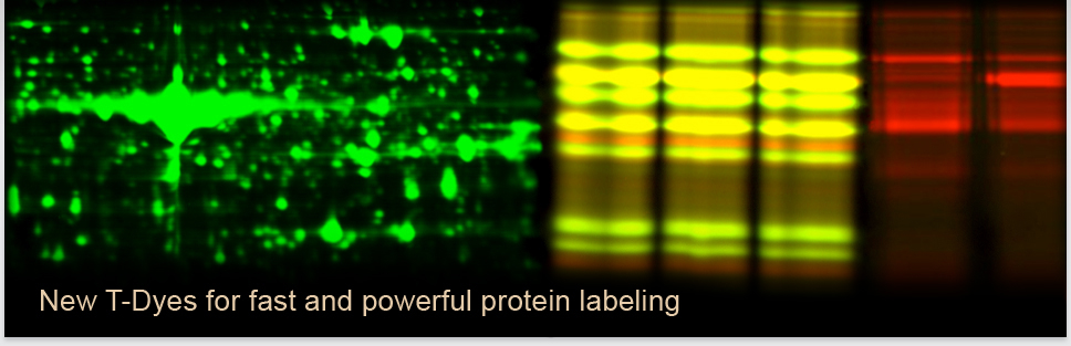 header new t-dyes for protein labeling