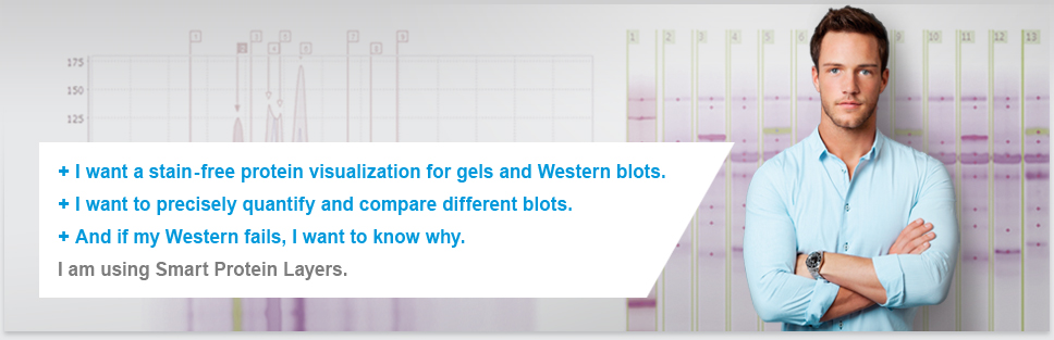 Smart Protein Layers: New Technology for stain-free normalization, standardization and quantification of 1D gels and Western Blots