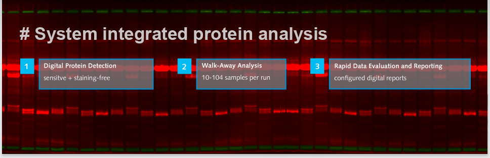 Header Standardized Protein Analysis