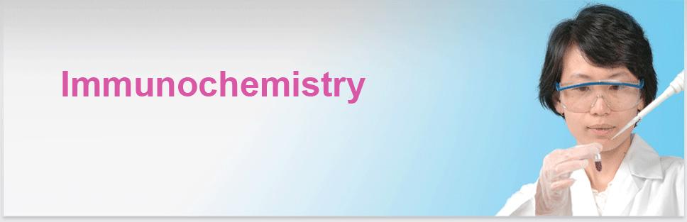 Image Header Protein Services: Immunochemistry