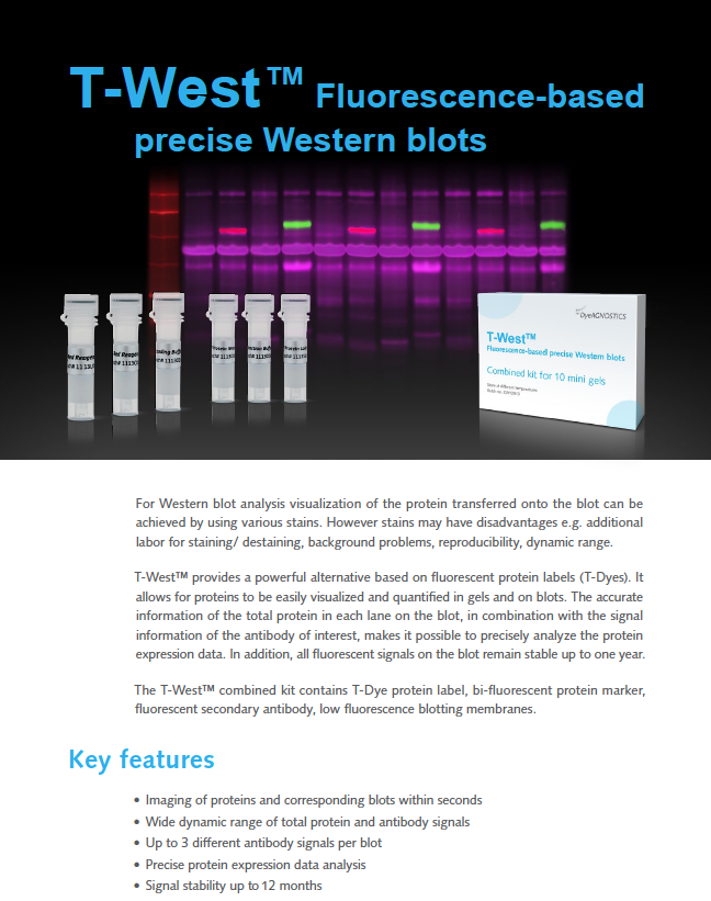 T-West combined kits for precise Western Blot analysis