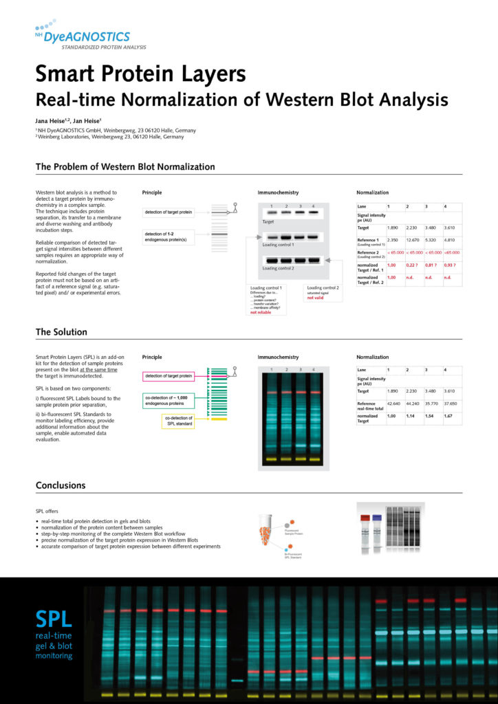 Poster N-Term Meeting Halle 2017: Smart Protein Layers- Real-Time Normalization of Western Blot Analysis
